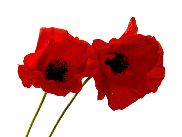 WE REMEMBER -THANK YOU